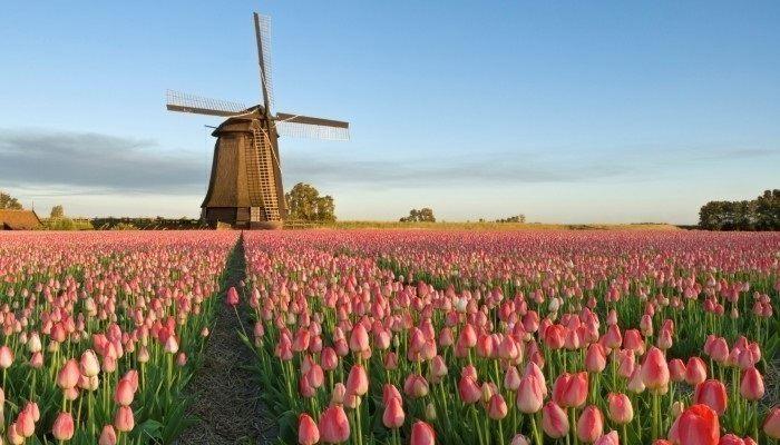 Как найти работу в Голландии